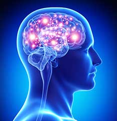 La Fonction Cognitive